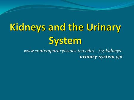 Kidneys and the Urinary System