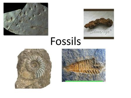 Fossils. How do fossils form?  For fossils to form, evidence of, or the bodily remains of the organism must.