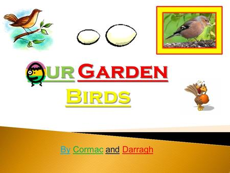 By Cormac and Darragh 1. The Robin is 14 cm long. 2. The Robin has an orange-red breast. 3. The Robin eats insects, seeds and fruit. 4. The Robin is.