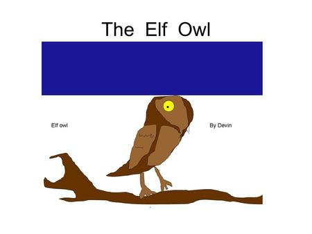 The Elf Owl By: Devin.