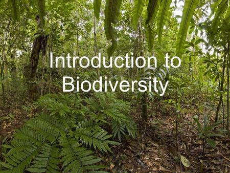 Introduction to Biodiversity. What the syllabus says….. Explain the concept and importance of biodiversity in tropical rainforests.
