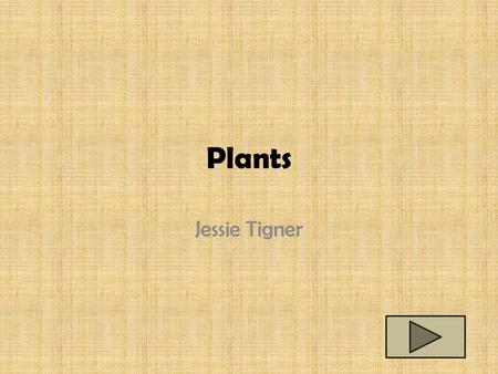 Plants Jessie Tigner. Content Area: Science Grade Level: 3 rd Summary: The purpose of this PowerPoint is to have the students be able to identify the.