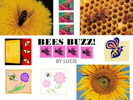 BEES BUZZ! BY LUCIE. Bees making honey The bees are putting honey in cells.