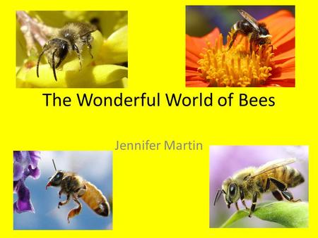 The Wonderful World of Bees Jennifer Martin. The Types of Bees 20,000 different species of bees and 11 'families.' Bees make up a superfamily known as.