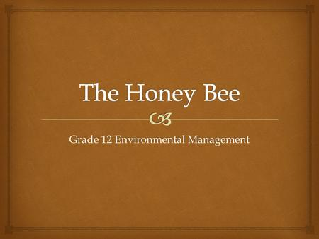 Grade 12 Environmental Management.   Bees going into their hive.