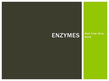 Enzymes And how they work.
