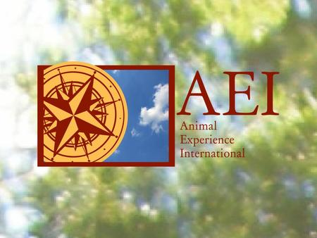 About AEI Animal Experience International matches people seeking volunteer positions with animal-related organizations around the world that need volunteers.