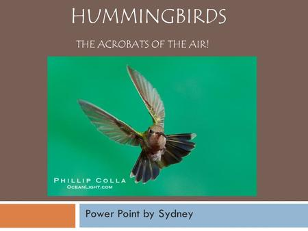 HUMMINGBIRDS THE ACROBATS OF THE AIR! Power Point by Sydney.