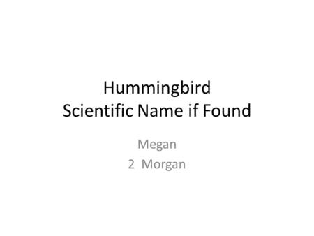 Hummingbird Scientific Name if Found Megan 2 Morgan.