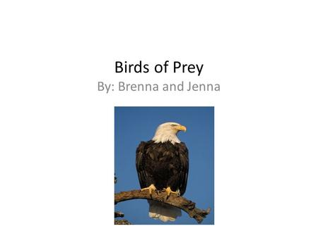 Birds of Prey By: Brenna and Jenna. Introduction Birds of prey hunt for their food. Birds of prey have sharp foot claws called talons. They have talons.