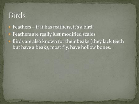 Feathers – if it has feathers, it's a bird Feathers are really just modified scales Birds are also known for their beaks (they lack teeth but have a beak),