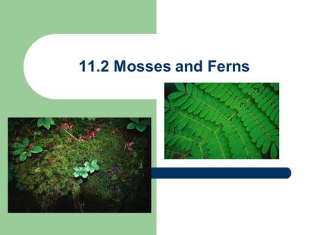 11.2 Mosses and Ferns. 11.2 Mosses & Ferns need moisture From original water-based plant forms, plants eventually adapted to life on land Plant life appeared.