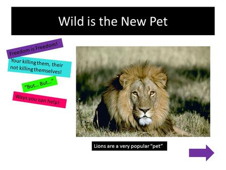 "Wild is the New Pet Your killing them, their not killing themselves! Ways you can help! Freedom is Freedom! ""But… But…"" Lions are a very popular ""pet"""