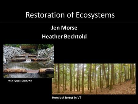 Restoration of Ecosystems Jen Morse Heather Bechtold Hemlock forest in VT West Hylebos Creek, WA.