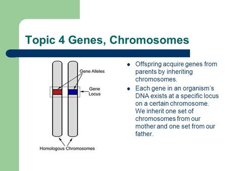 Topic 4 Genes, Chromosomes