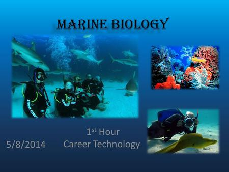 Marine Biologists  Ppt Download