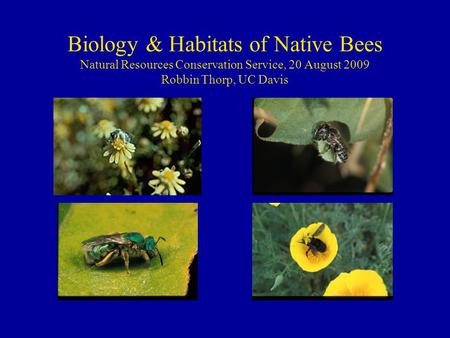 Biology & Habitats of Native Bees Natural Resources Conservation Service, 20 August 2009 Robbin Thorp, UC Davis.