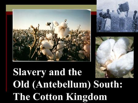 Slavery and the Old (Antebellum) South: The Cotton Kingdom.