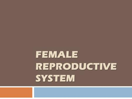 FEMALE REPRODUCTIVE SYSTEM. Female sex hormones  Steroids hormones.  Synthesized from cholesterol precursor.  Converted from one to the other in the.