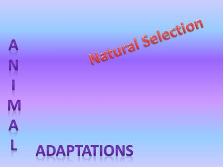 Natural Selection Anim A l ADAPTATIONS.