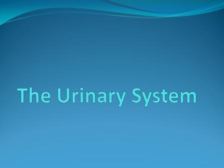 The Urinary System.