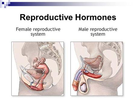 Reproductive Hormones. Sex hormones are synthesized from cholesterol (a fatty acid) and secreted throughout a person's lifetime at different levels. Male.