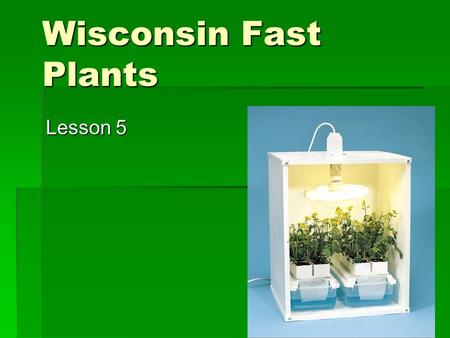 Wisconsin Fast Plants Lesson 5.