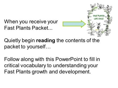 When you receive your Fast Plants Packet... Quietly begin reading the contents of the packet to yourself… Follow along with this PowerPoint to fill in.