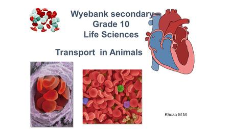 Khoza M.M Transport in Animals Wyebank secondary Grade 10 Life Sciences.