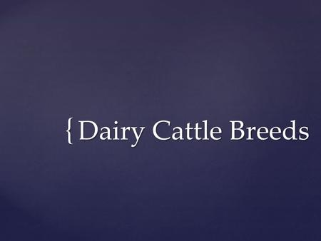 { Dairy Cattle Breeds.  Origin: Scotland (late 1700's)  Imported to the US in the 1800's  Description of breed:  Red and White with the shade of red.