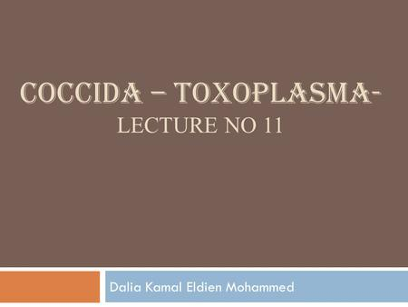 COCCIDA – TOXOPLASMA- LECTURE NO 11 Dalia Kamal Eldien Mohammed.