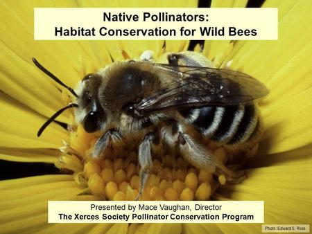 Native Pollinators: Habitat Conservation for Wild Bees