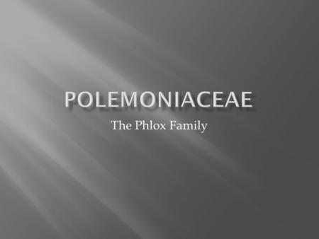 PolemoniaceaE The Phlox Family.