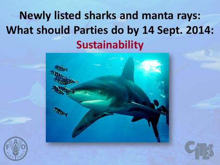 Newly listed sharks and manta rays: What should Parties do by 14 Sept. 2014: Sustainability.