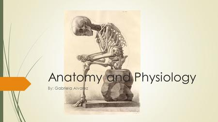 Anatomy and Physiology By: Gabriela Alvarez. The Human Body  Human body has a head, neck, trunk (thorax, abdomen), two arms and hands and two legs and.