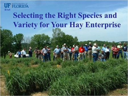 Selecting the Right Species and Variety for Your Hay Enterprise