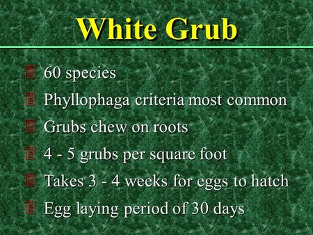 White Grub 360 species 3Phyllophaga criteria most common 3Grubs chew on roots 34 - 5 grubs per square foot 3Takes 3 - 4 weeks for eggs to hatch 3Egg laying.