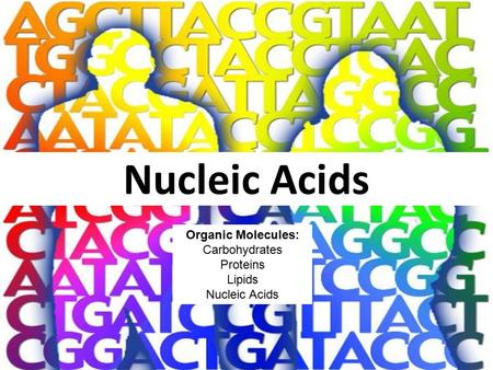 Nucleic Acids Organic Molecules: Carbohydrates Proteins Lipids Nucleic Acids.