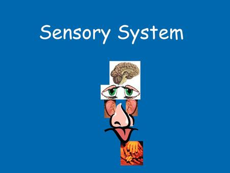 Sensory System. 1B3 Sensory System OB30locate the main parts of the eye on a model or diagram and describe the function of the cornea, iris, lens, pupil,
