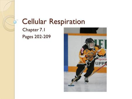 Cellular Respiration Chapter 7.1 Pages 202-209.
