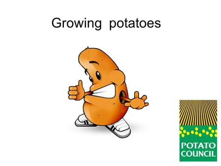 Growing potatoes. Potatoes come from a plant. Where are the potatoes?
