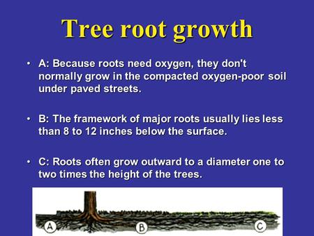 Tree root growth A: Because roots need oxygen, they don't normally grow in the compacted oxygen-poor soil under paved streets.A: Because roots need oxygen,