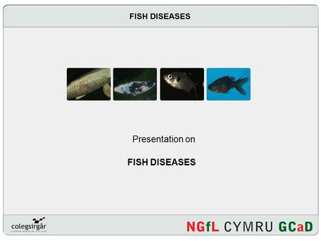 FISH DISEASES Presentation on FISH DISEASES. Introduction How do you recognise that a fish might be ill? What are the causes of fish disease? How do you.