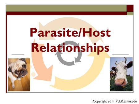 Parasite/Host Relationships Copyright 2011 PEER.tamu.edu.