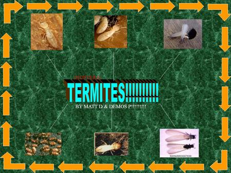(ISOPTERA) x BY MATT D & DEMOS P!!!!!!!!! Termites are little insects that are termed along with the ants. The scientific name for Termites is ISOPTERA.