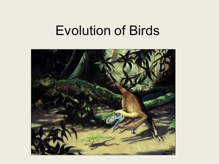 Evolution of Birds. Evolution of birds Kingdom Animalia, Phylum Chordata, Class Aves Where did they come from? –From the Mesozoic Era, a debate of how.