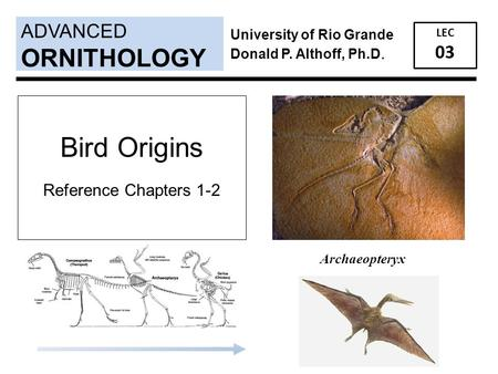 ADVANCED LEC 03 ORNITHOLOGY University of Rio Grande Donald P. Althoff, Ph.D. Archaeopteryx Bird Origins Reference Chapters 1-2.