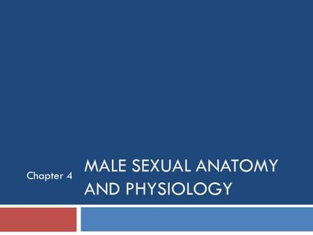 MALE SEXUAL ANATOMY AND PHYSIOLOGY Chapter 4. Learning Objectives  External Sex Organs  Internal Sex Organs  Health Problems of the Urogenital System.
