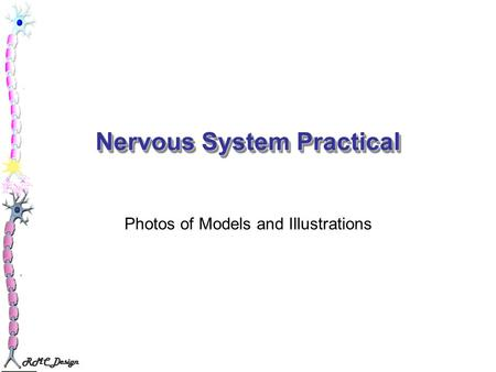 RMC Design Nervous System Practical Photos of Models and Illustrations.