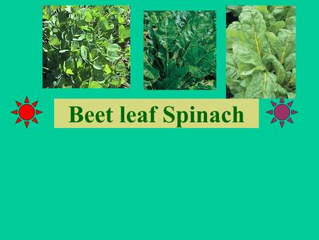 Beet leaf Spinach.